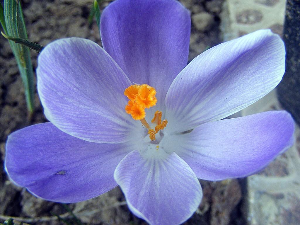 ingrijirea florilor