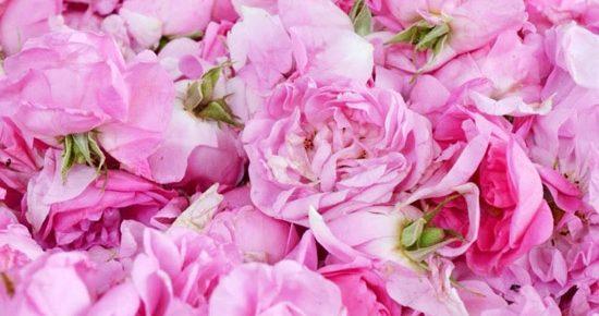 trandafirul-de-dulceata