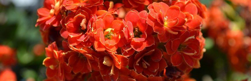 cactusi si suculente