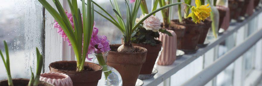 flori de primavara in ghiveci