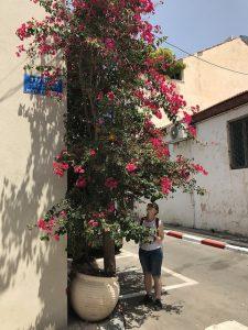 floarea de hartie