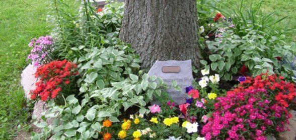 Ce flori plantam sub pomi