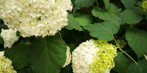 plante pentru locuri umbroase