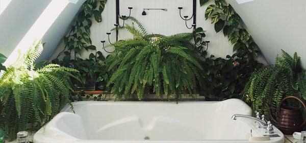 plantele care reduc igrasia
