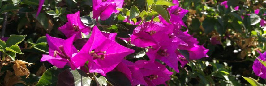 cad florile la floarea de hartie