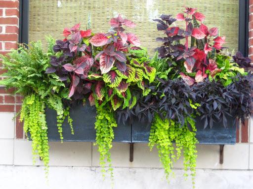 flori in jardiniere