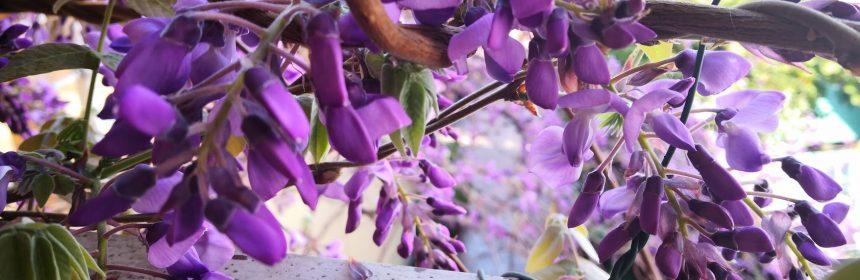 cele mai parfumate plante