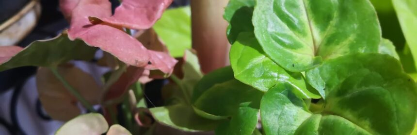 ertilizam plantele primavara